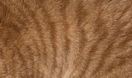 The texture of the skin of cats Royalty Free Stock Photos