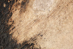 Texture skin cow Royalty Free Stock Photo