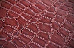 Texture of a skin of a snake Stock Image