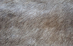 Texture of a skin of a wild boar Stock Photos