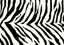 Texture - skin of a zebra Stock Image