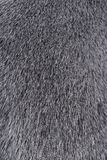 Texture of Smooth animal gray hair. Closeup Royalty Free Stock Images