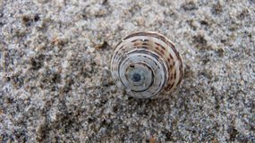 Texture snail on granite. Texture of the granite snail retreating into its shell Stock Photography