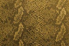 The texture of snake skin Stock Photos