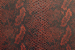 Texture of snake skin in black and red shade