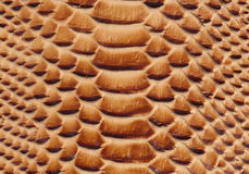 Texture of a snakeskin Stock Images