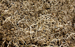 Texture soil and dry grass Royalty Free Stock Image