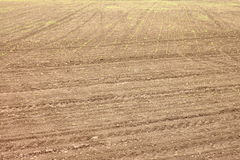 Texture of soil with winter crops as natural background Stock Photos