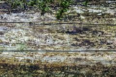 Texture of a solid tree trunk, covered with moss. Unpainted texture. Widescreen photo. stock images