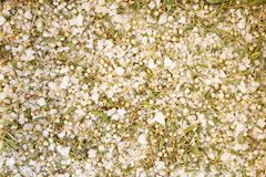 Texture of spices mix and sea salt close-up, spice or seasoning as background. Terragon, Sea salt. White pepper, Pepper flakes, thyme, Oregano stock image