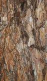 Texture of a spruce bark Royalty Free Stock Photos