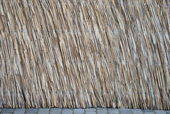 Texture stem bulrush Royalty Free Stock Photo