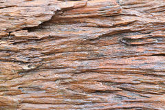 Texture stem wood. Texture old stem wood in Thai forest Stock Photo