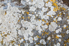 Texture of stone covered with mold Stock Photography
