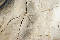 Texture of stone with cracks looks like a bone Stock Photo