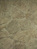 Texture. Stone texture in green-beige tinge royalty free stock photo