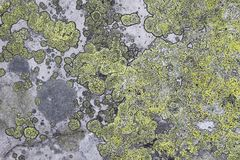 texture of the stone with lichen
