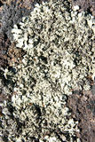 Texture of stone, moss, lichen Stock Photography