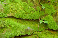 Texture of stone with moss Stock Images