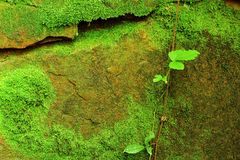 Texture of stone with moss Royalty Free Stock Photo
