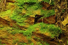 Texture of stone with moss Stock Image
