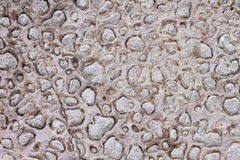 Texture of the stone Stock Image
