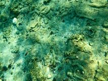 Texture of stones, earth, seabed with coral reefs and algae under blue greenish water, underwater view of the sea, the ocean in a. Tropical resort. The stock image
