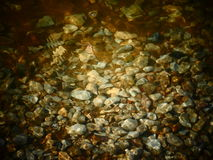 Texture of stones under water Royalty Free Stock Image