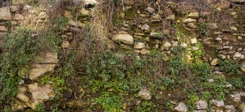 Old green wall. The texture of the stones on which the grass grows royalty free stock images