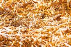 Texture of straw in the bright sunlight. Texture of straw in bright sunlight stock photo