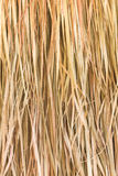 Texture of straw stock photography