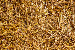Texture of straw. Close up of ground. Texture of straw stock image