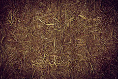 Texture of straw. Royalty Free Stock Photo