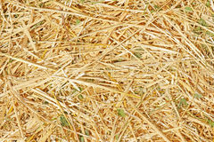 Texture of  straw. Texture of fresh yellow  straw Stock Photography
