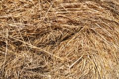 Texture of straw and hay closeup. Stack stock photos