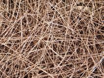 Texture of straw outdoors. In the garden royalty free stock photos
