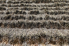 Texture of straw Stock Photo