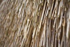 Texture. straw roof Stock Photos