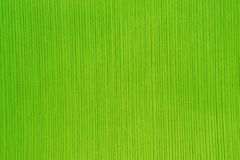 Texture of the striped paper in bright green color
