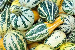 Texture of striped pumpkins Royalty Free Stock Photography