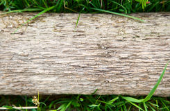 Texture of stub log lying on green grass Royalty Free Stock Images