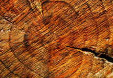 Texture of a stump Stock Photography