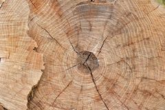 Texture Stump of tree - section of the trunk with annual rings closeup Royalty Free Stock Photos