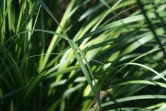 Texture subtile douce de fond d'herbe image libre de droits