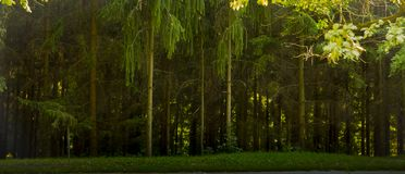 The texture of the summer beautiful green forest.  Royalty Free Stock Images