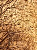 texture in sunlight of tree vines on wall side bricks house Royalty Free Stock Photography