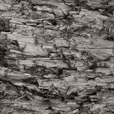 Texture superficielle par les agents naturelle de tronçon de Grey Taupe Brown Cut Tree, grand Gray Lumber Background Wood saccagé images stock