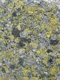 Texture sur la roche Photos stock