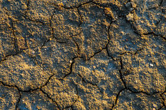The texture of the surface of the earth that has cracked from dr Royalty Free Stock Photo