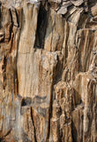 Texture of surface of fossil wood. Surface of fossil wood, shown as featured texture, character and color Royalty Free Stock Photo